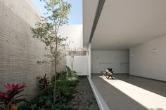 This courtyard garden is screened behind a concrete wall at the front of the house at ground level, as well as by the projecting top section of the building, which cantilevers out from the front of the house.