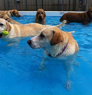 The Dog House Cage Free Dog Boarding Bloomington Dog Daycare