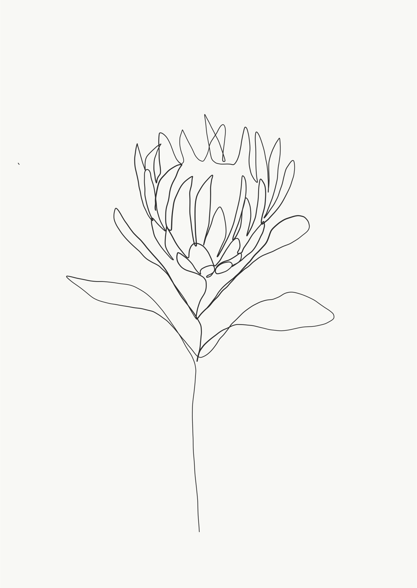 Emma Ryan Copyright Protea Single Line Drawing Flower Line Drawings Line Drawing Tattoos Drawing Artwork