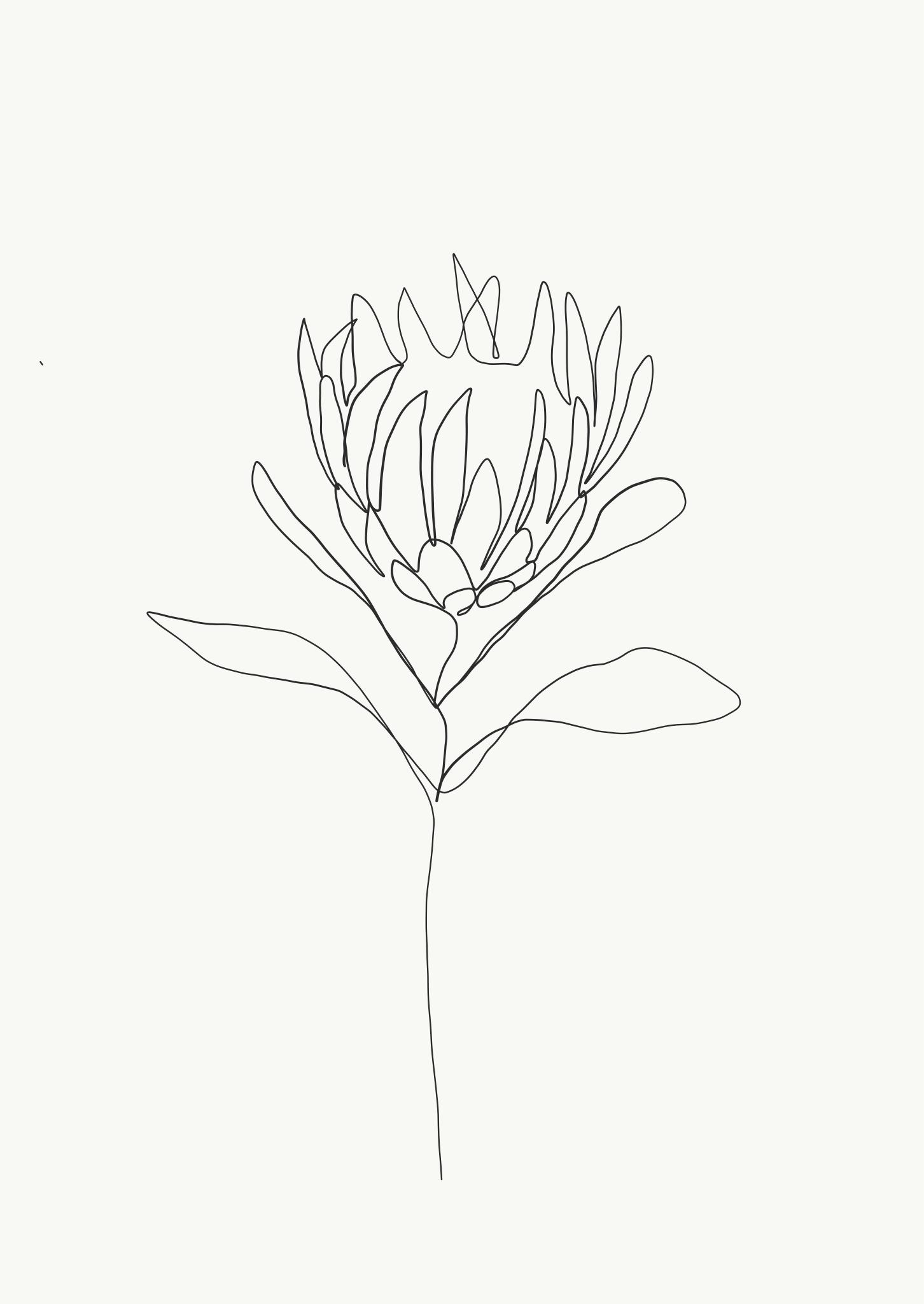Emma Ryan Protea single line drawing Artwork Pinterest