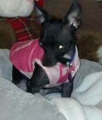 Lost Pet Alert Lost Dog In St Paul Mn Please Pin And Help Us Find Hope Losing A Dog Pets Losing A Pet