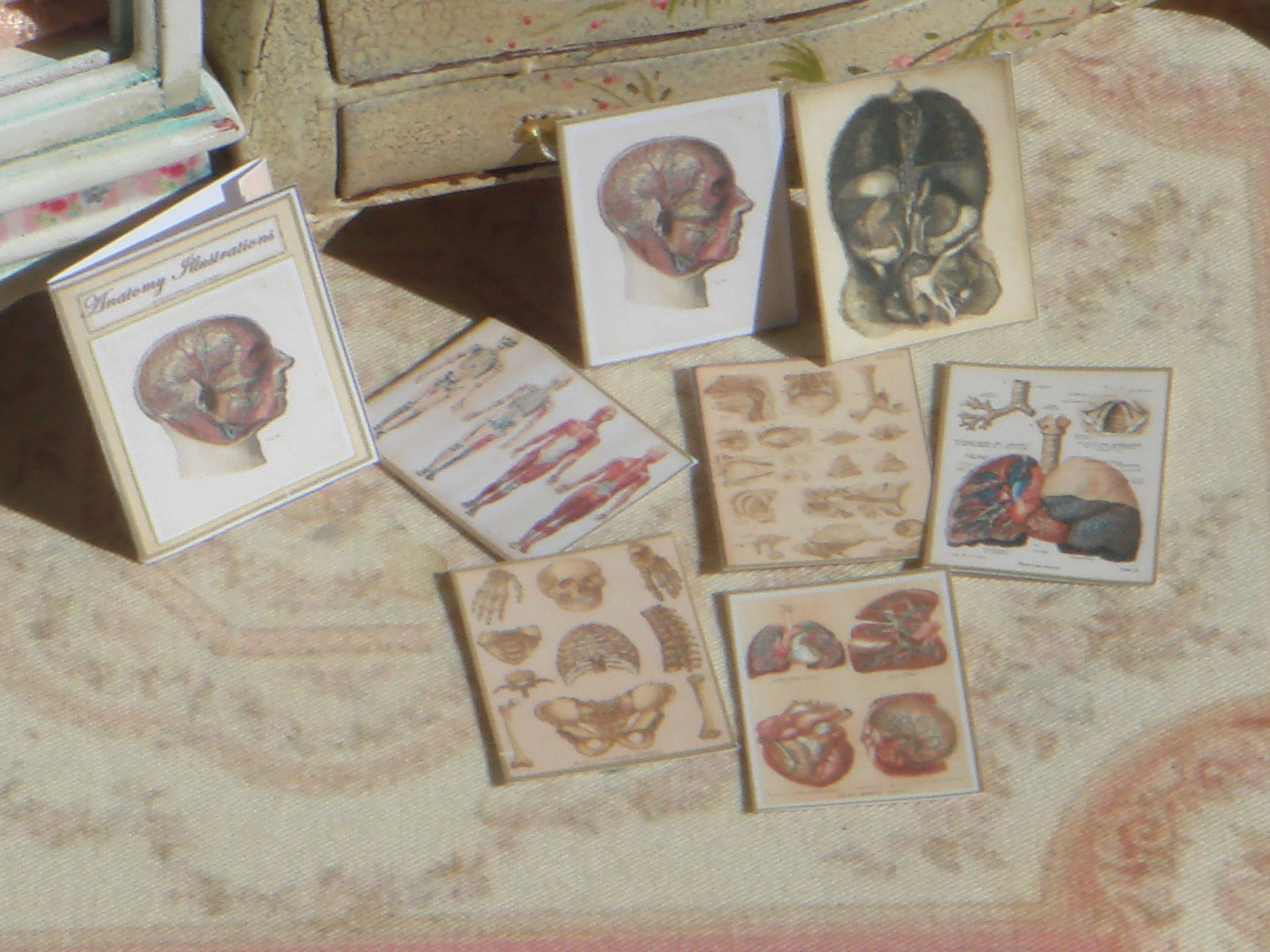 Dollhouse Vintage Anatomy folder with illustrations. 1:12 Miniature Medical illustations miniature folder #miniaturemedical