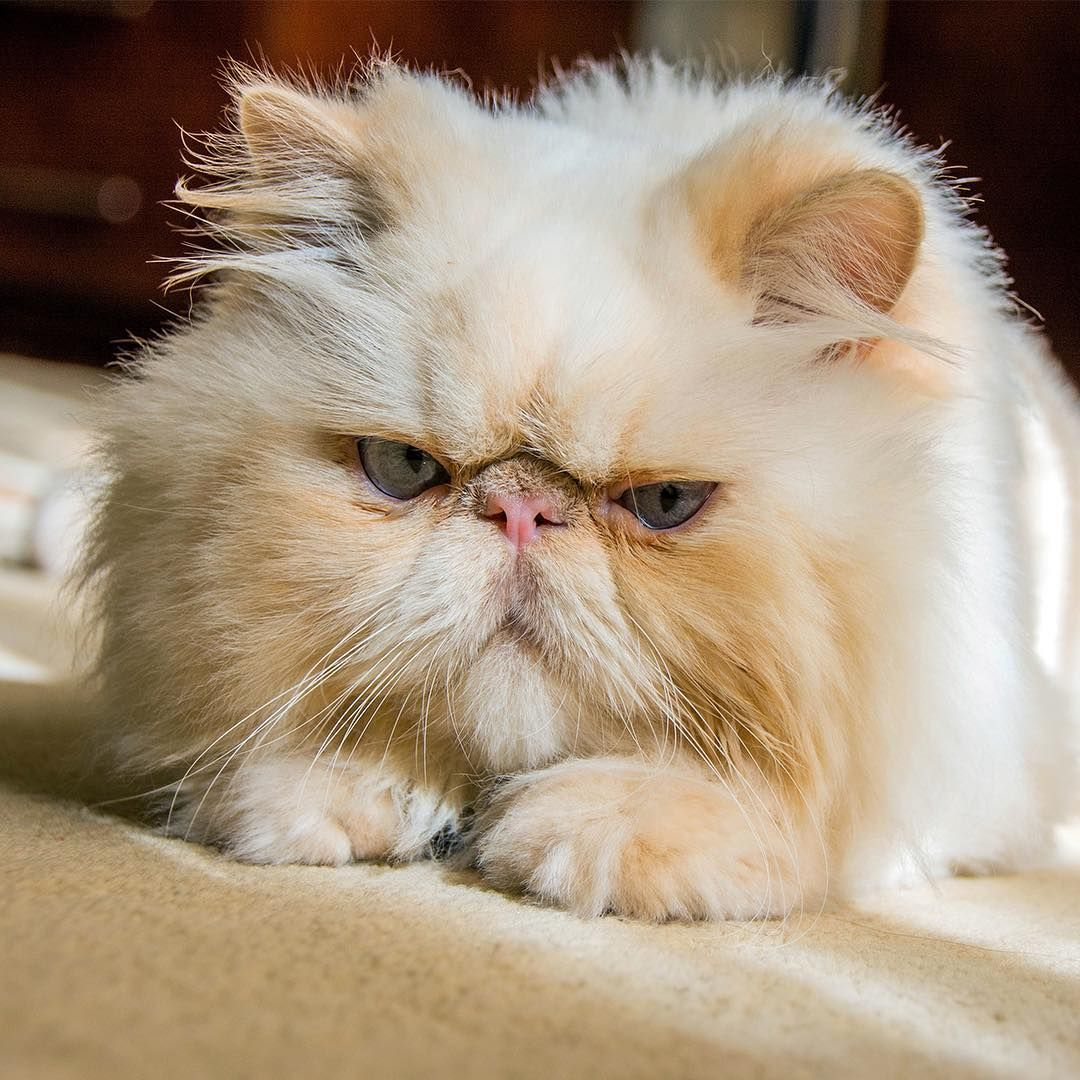 That face when you wake up and realize its only Thursday.  #persiancat #persiancatstagram #persiancatlovers #catsofinstagram #cat #bestkennel #kenneljenner #campbestfriends #checkusoutonyelp #losangeles #animalboarding #petcare  That face when you wake up and realize its only Thursday.  #persiancat #persiancatstagram #persiancatlovers #catsofinstagram #cat #bestkennel #kenneljenner #campbestfriends #checkusoutonyelp #losangeles #animalboarding #petcare