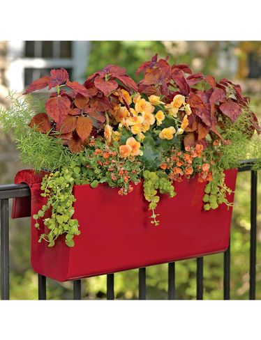 Exceptional Viva Self Watering Balcony Railing Planter