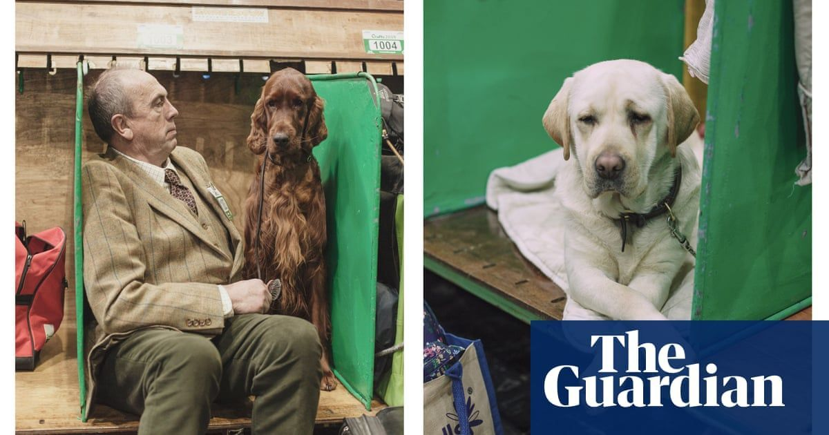 Canine Extravaganza Crufts 2019 In Pictures Dog Show Big
