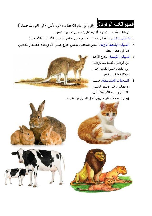 Resultat De Recherche D Images Pour بحث عن الحيوانات الاليفة والمفترسة