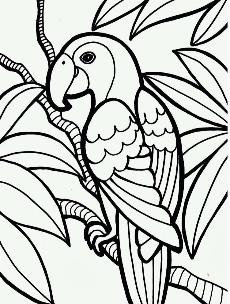 Account Suspended Bird Coloring Pages Jungle Coloring Pages Animal Coloring Pages