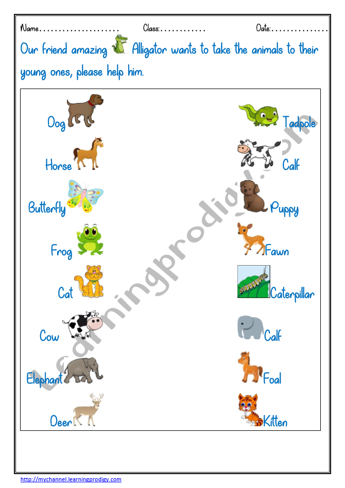 Match the Animals to their Young Ones1 in 2020