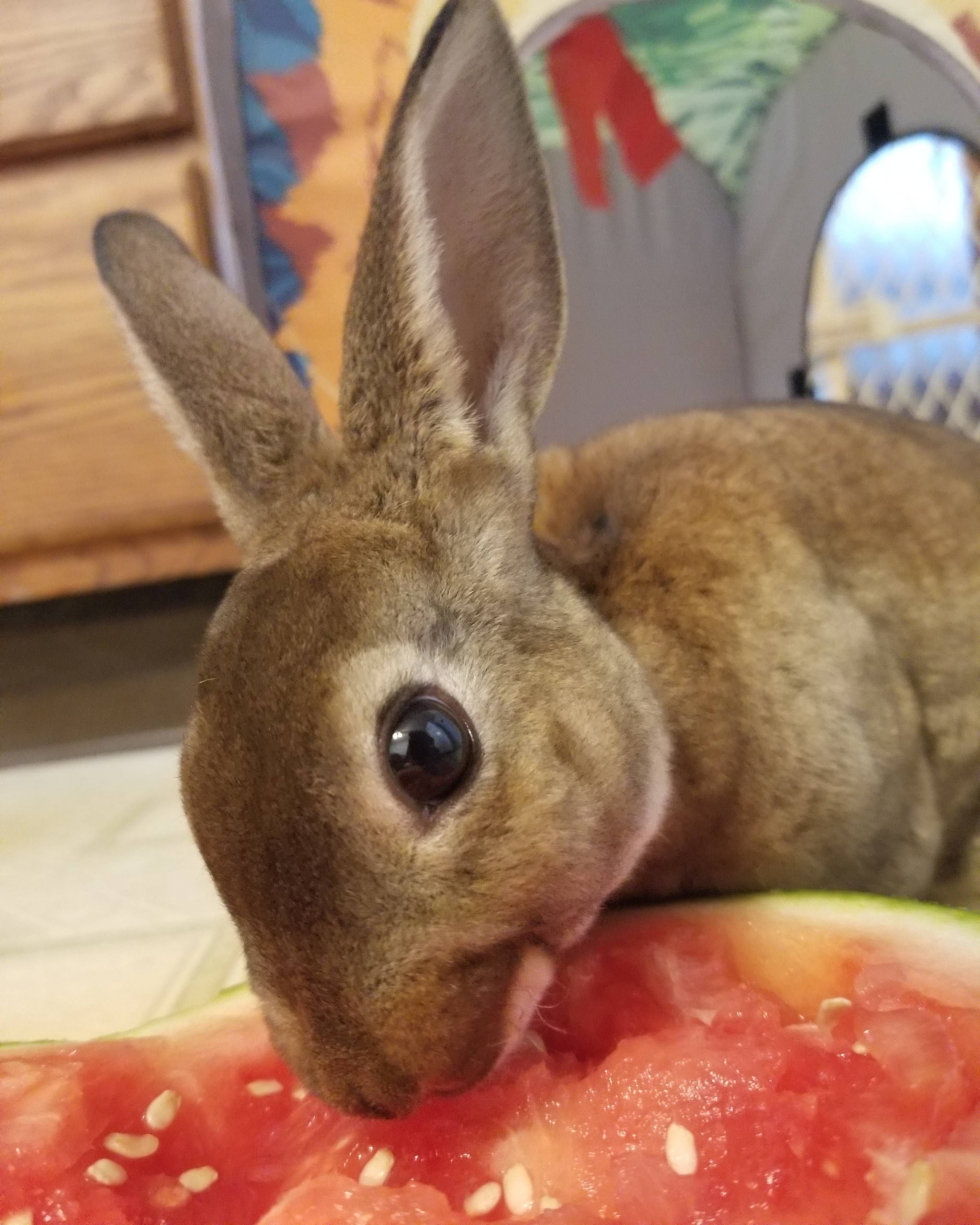 Are rabbits easy to look after with images cat