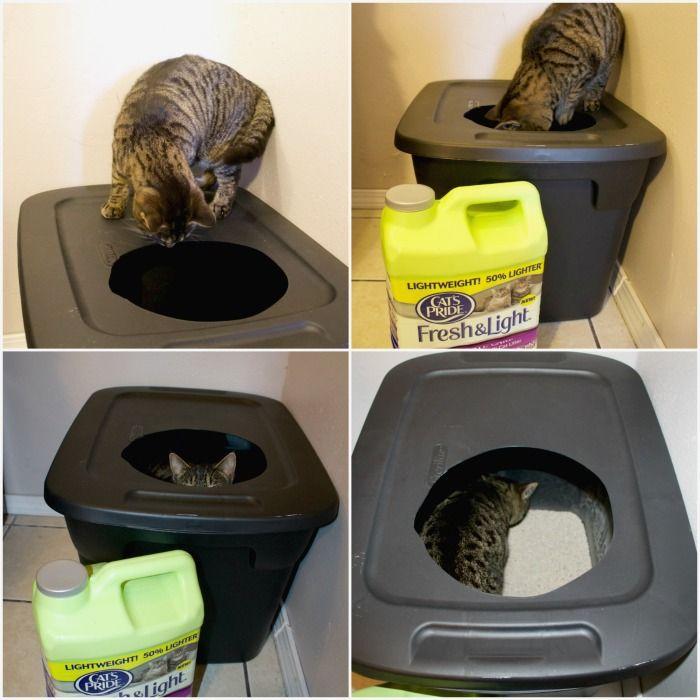 Diy Mess Free Cat Litter Box Mom Luck Cat Litter Box Diy Cheap Cat Litter Cat Litter