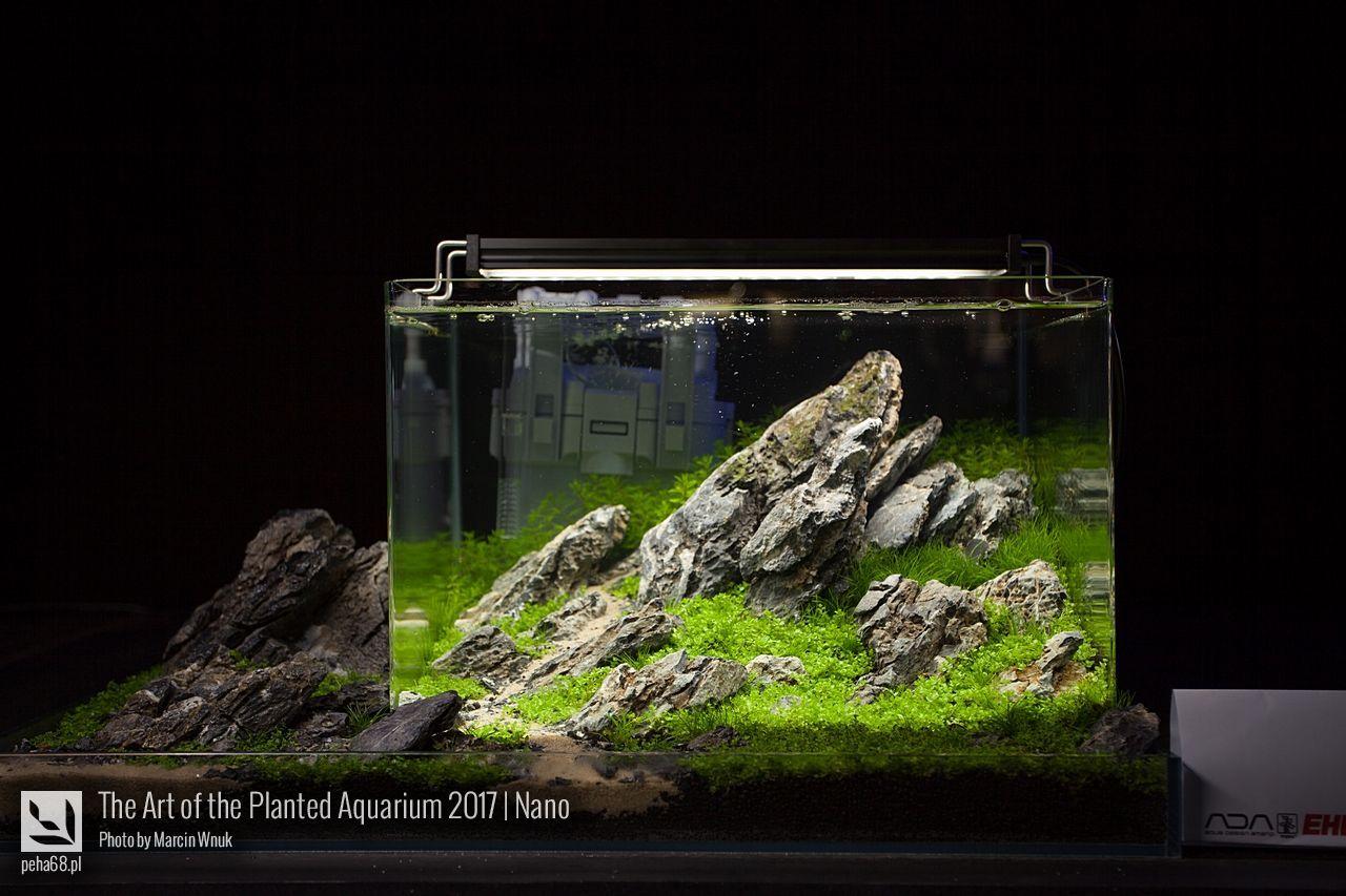 The art of the planted aquarium nano peha akwarium w