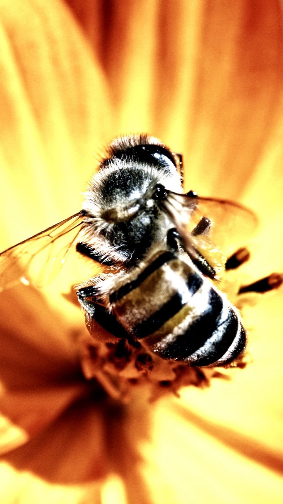 Flower Bee Pollination Insect iPhone 8 Wallpapers Bee