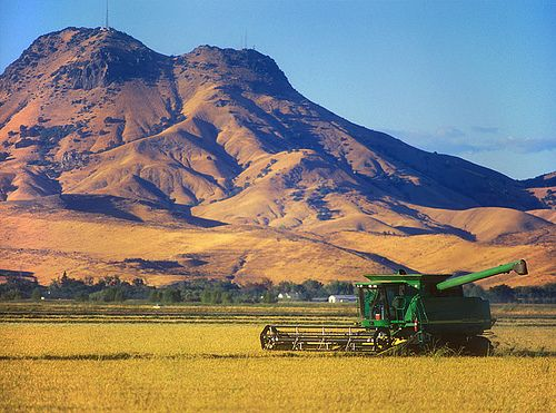 Rice Harvesting Under The Sutter Buttes Travel