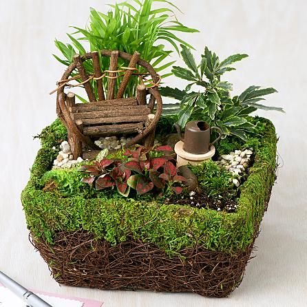 Fairy Foliage Dish Garden And Other Flowers Plants At Proplants Com Fairy Garden Designs Miniature Fairy Gardens Mini Fairy Garden