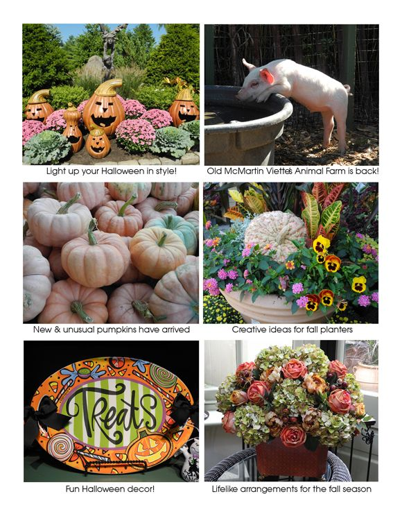Martin Viette Nurseries Fall Planters Halloween Decorations