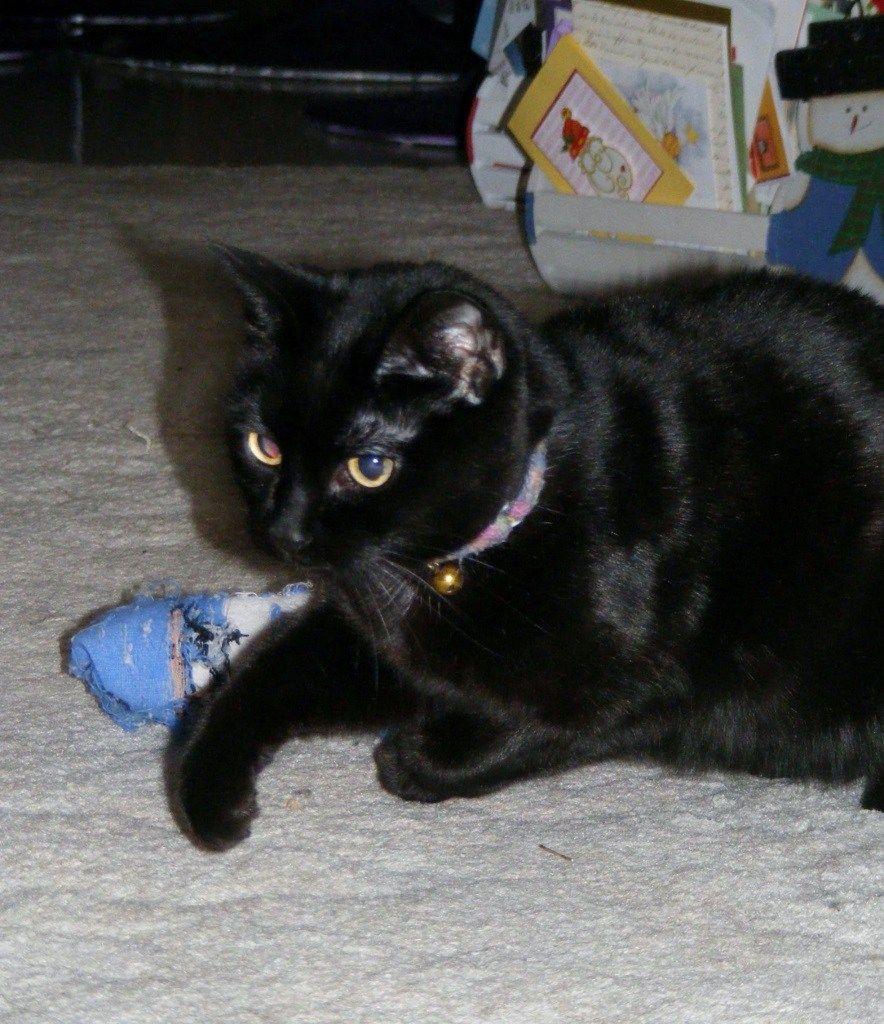 Shadow A Very Special Cat Part 3 Katzenworld Cats Your Pet Pet News