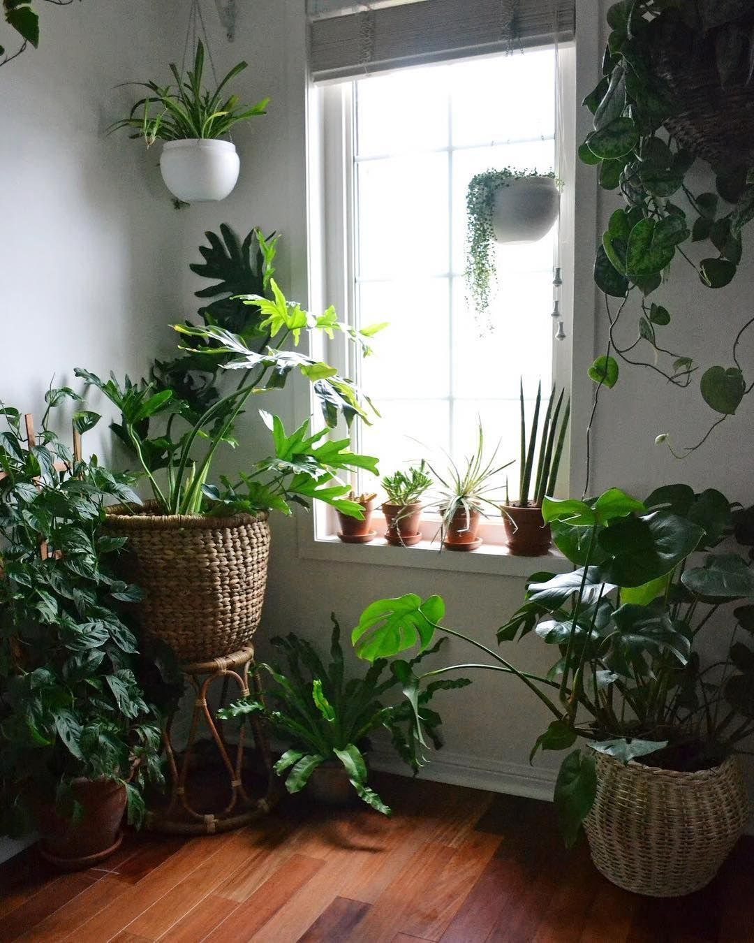 House Plants For Shady Rooms: Interior Design Plants, House Plants