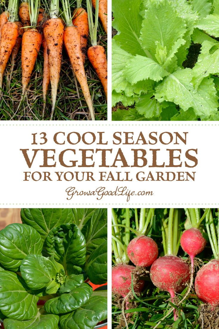 13 Quick Growing Vegetables For Your Fall Garden Growing 400 x 300