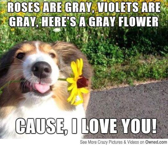 Dog Poem Funny Dog Pictures Dog Poems Funny Animals