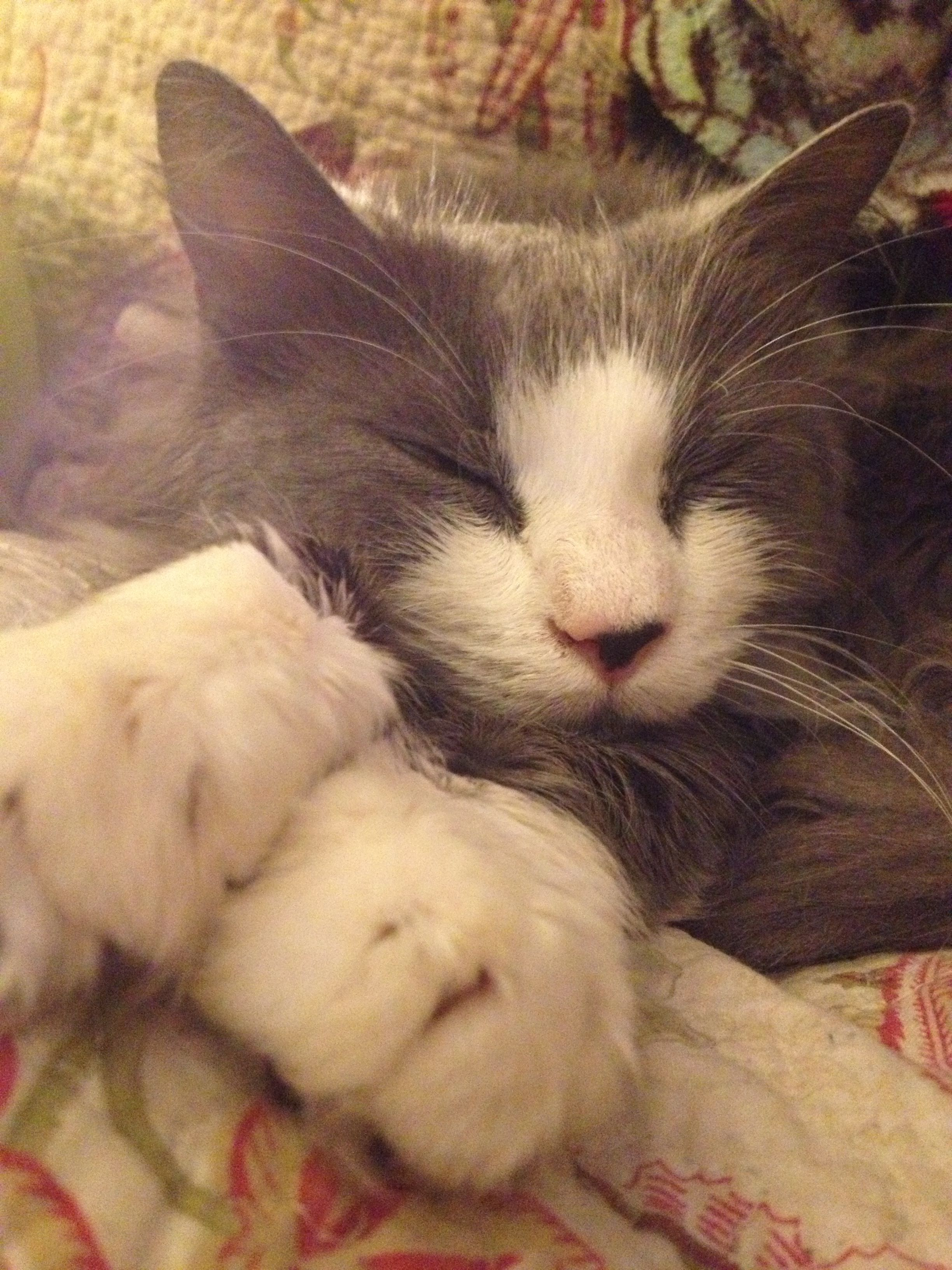 Sleepy Mouse.