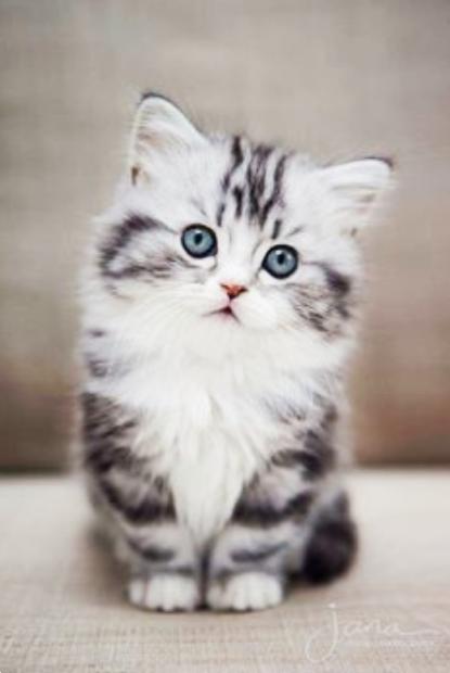 Construire son site web avec les options par contrat de #adorablekittens
