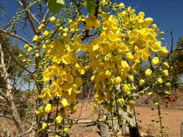 Blooms in the Outback, Australia - courtesy of Linda Gant