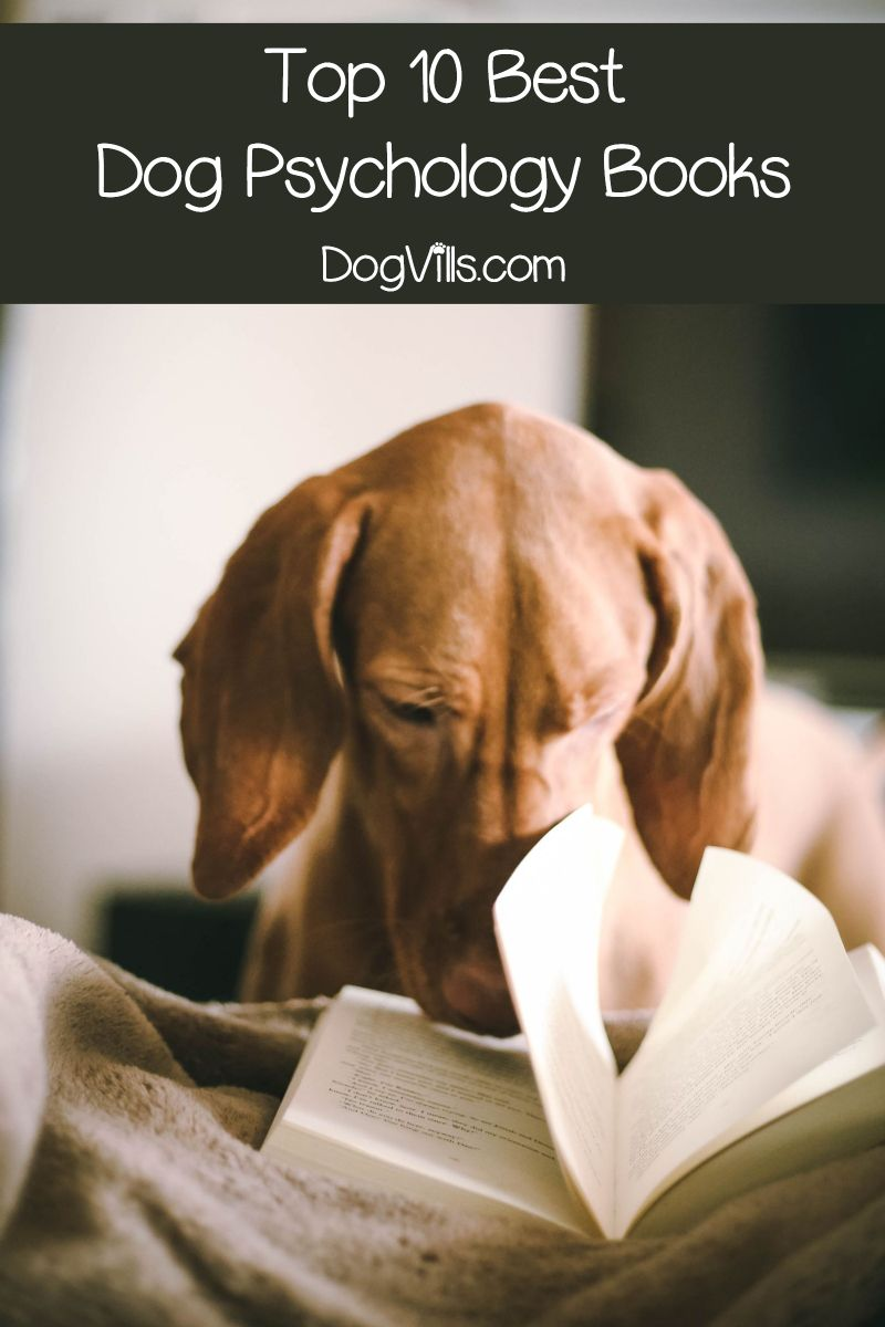 Top 10 Dog Psychology Books Every Pet Parent Should Read Dog