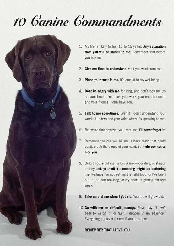 For my pups