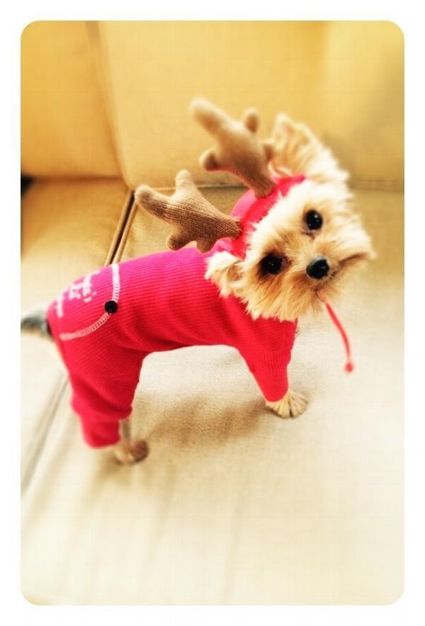Santa S Lil Helper Dog Pajamas At Baxterboo Puppies And Kitties