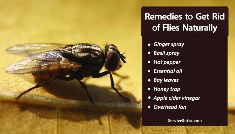 be66bf8342a51b009ac23628d189b42f - How To Get Rid Of House Flies In India