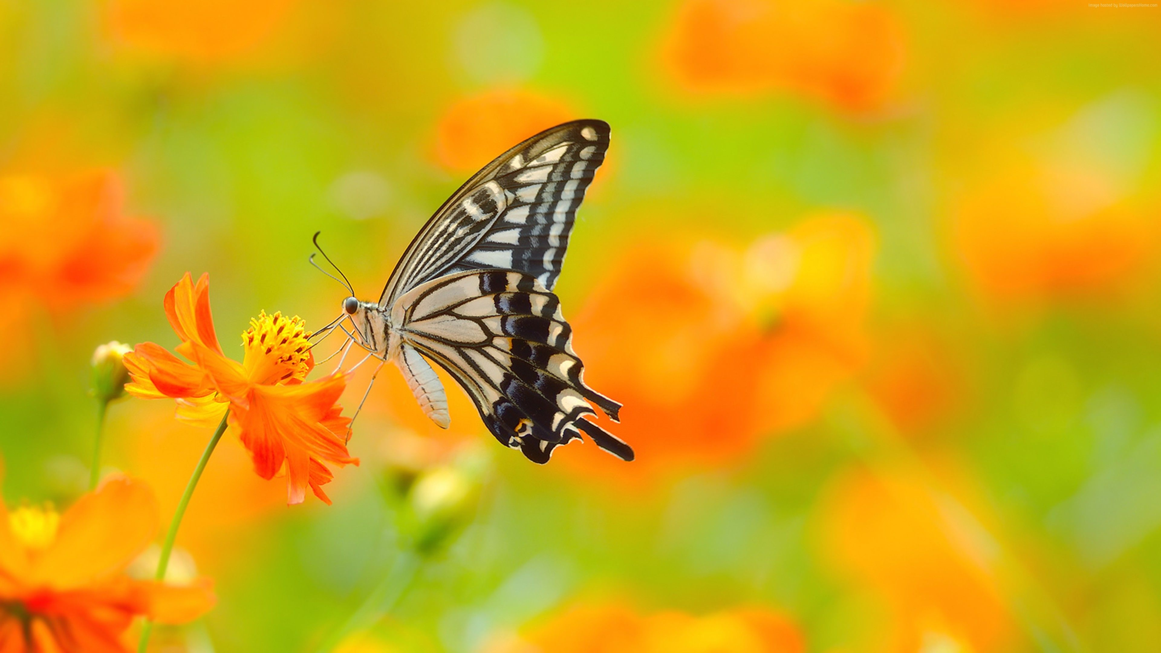 Wallpaper Butterfly 5k 4k Wallpaper Colorful Flowers Yellow Insects Animals With Images Butterfly Wallpaper Beautiful Butterflies Butterfly Pictures