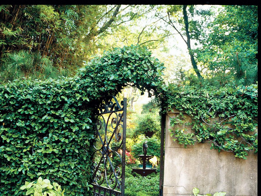 Savannah's Secret Gardens Savannah gardens, Savannah