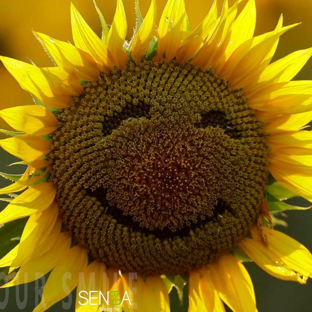Hay que sonreír más, en la medida de lo posible, cada día. . . . . . . . .