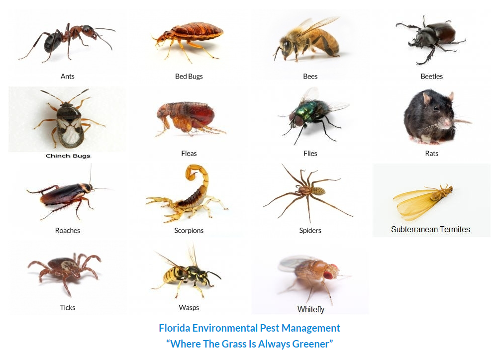 Florida Environmental Has A Pest ID Encyclopedia To Help You Identify The  Creepy Crawlers That Have You Calling For Home Pest Control U0026 Exterminator  In WPB.