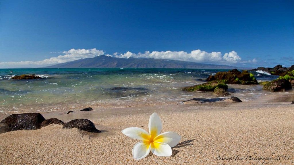 Hau Oli Makahiki Hou Hawaii Pictures Hawaii Pictures Hawaiian Beaches Hawaiian Background