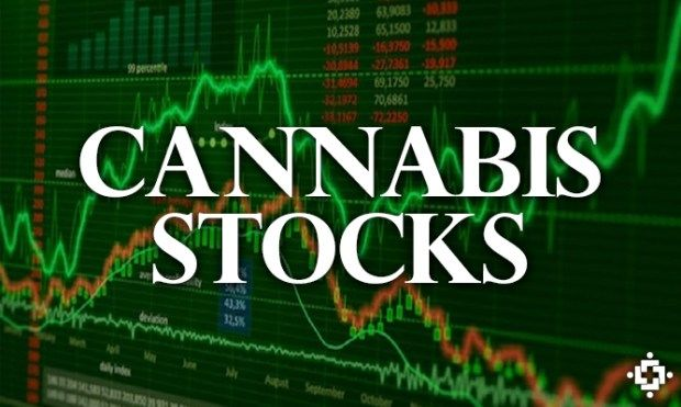 Dont Try To Be Warren Buffett With Pot Stocks: Analyst
