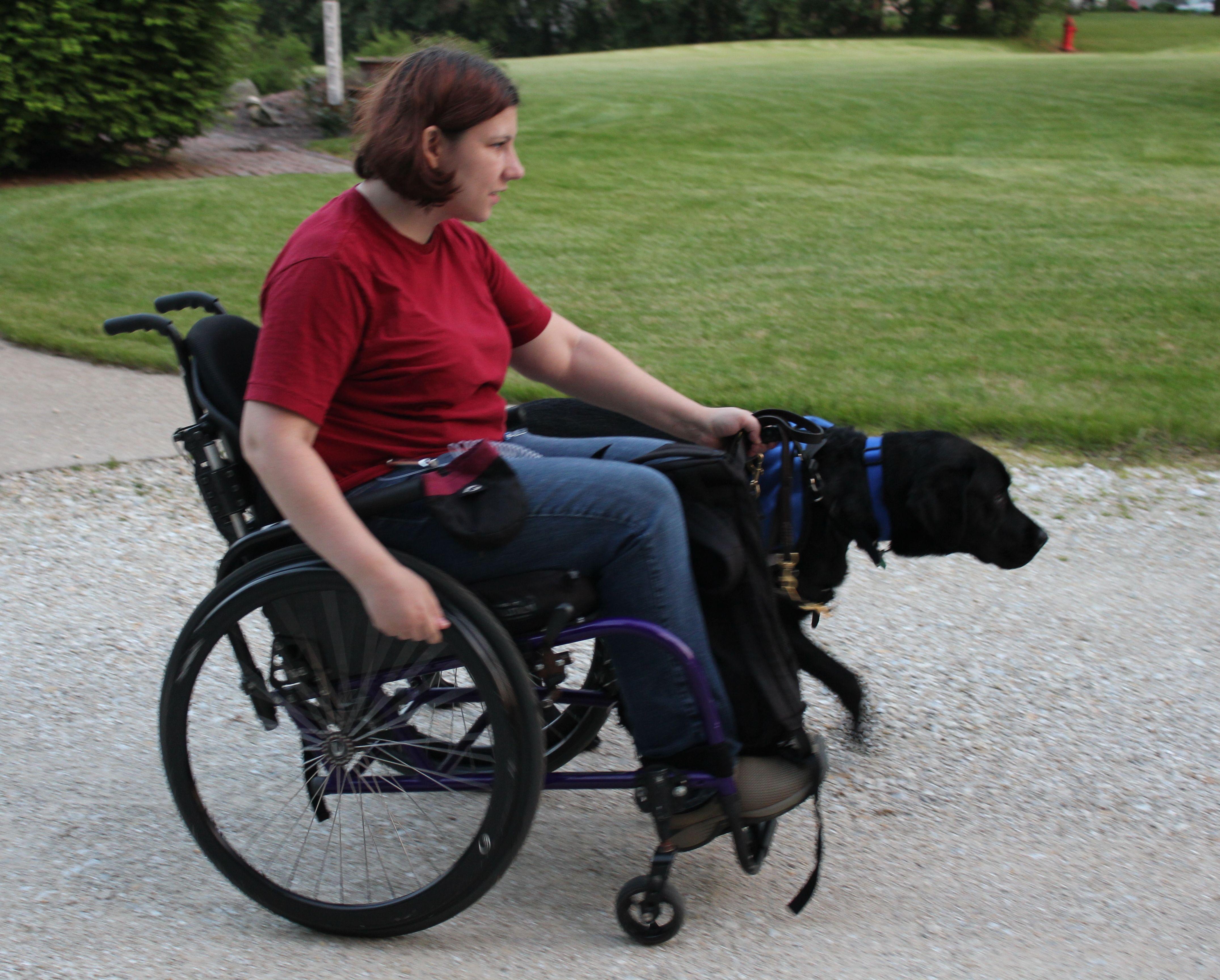 My service dog, Herbie, pulling my wheelchair. Dog