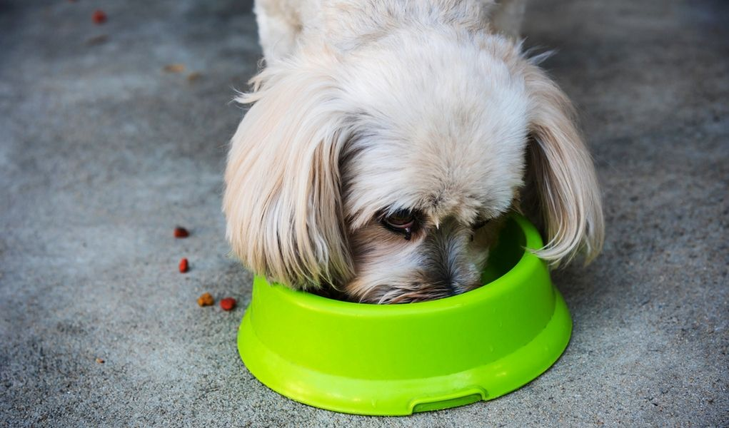 10 vet foods for shih tzus dogs lap dogs