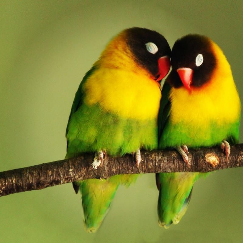Love birds ❤ #HappyTails
