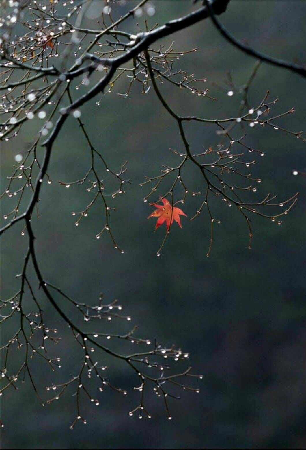 Just A Simple Thought Provoking Picture Make It Deep And Meaningful Or As Simple As It Appears Autumncolours Nature Photography Beautiful Nature Nature Pictures