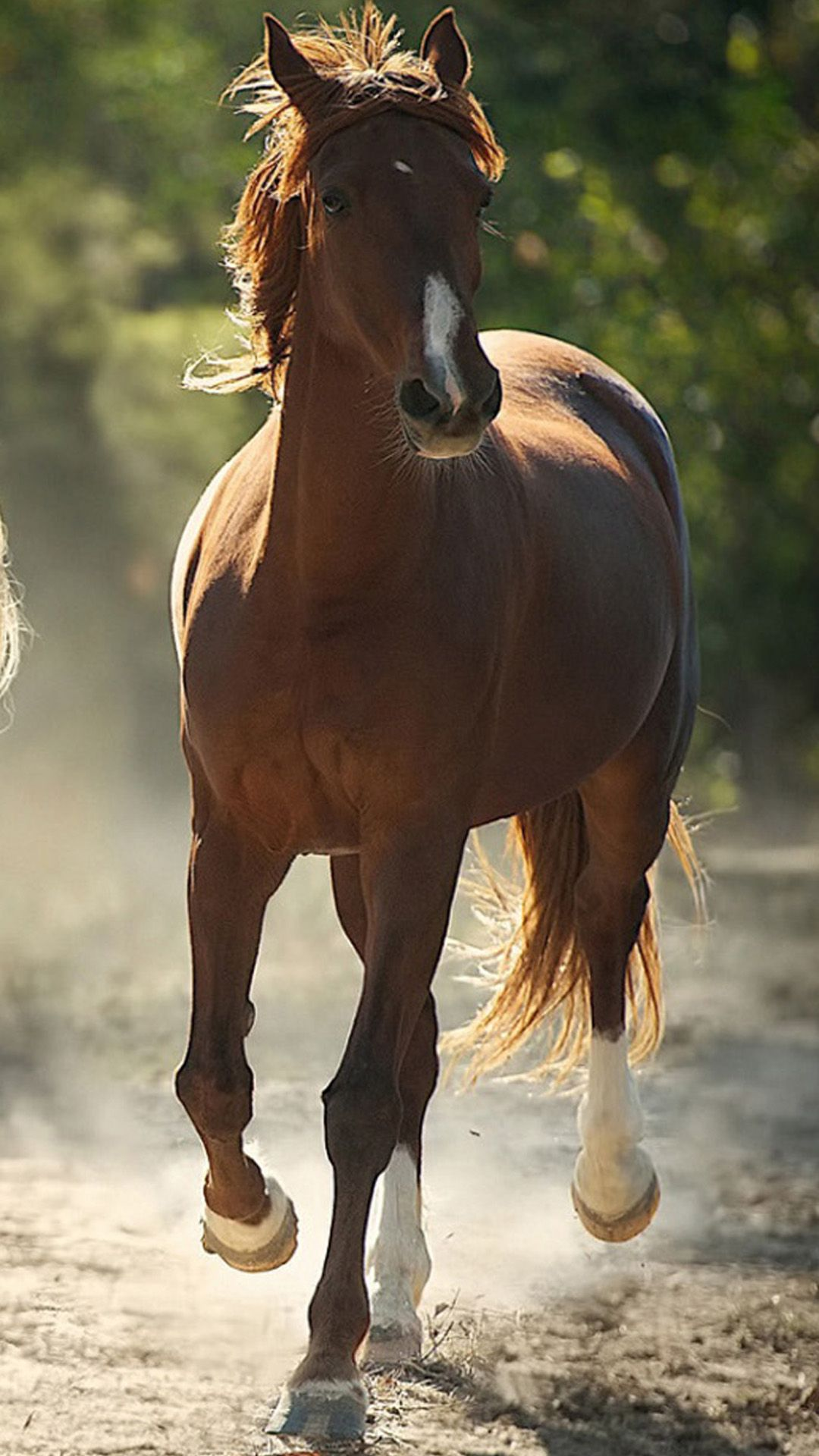 TAP AND GET THE FREE APP! Animals Beautiful Horse Colorful
