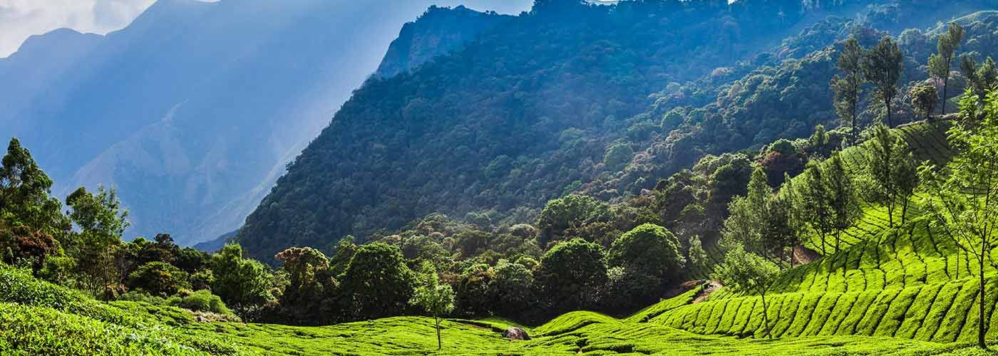 Fly To Sri Lanka S Stunning Hill Country In The Blink Of An Eye With Cinnamon Air Diverse Landscape Sri Lanka Air