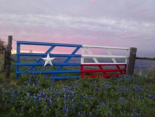 Pin By Kylie Rodriguez On Someday I Ll Do This Texas Bluebonnets Blue Bonnets Texas Forever