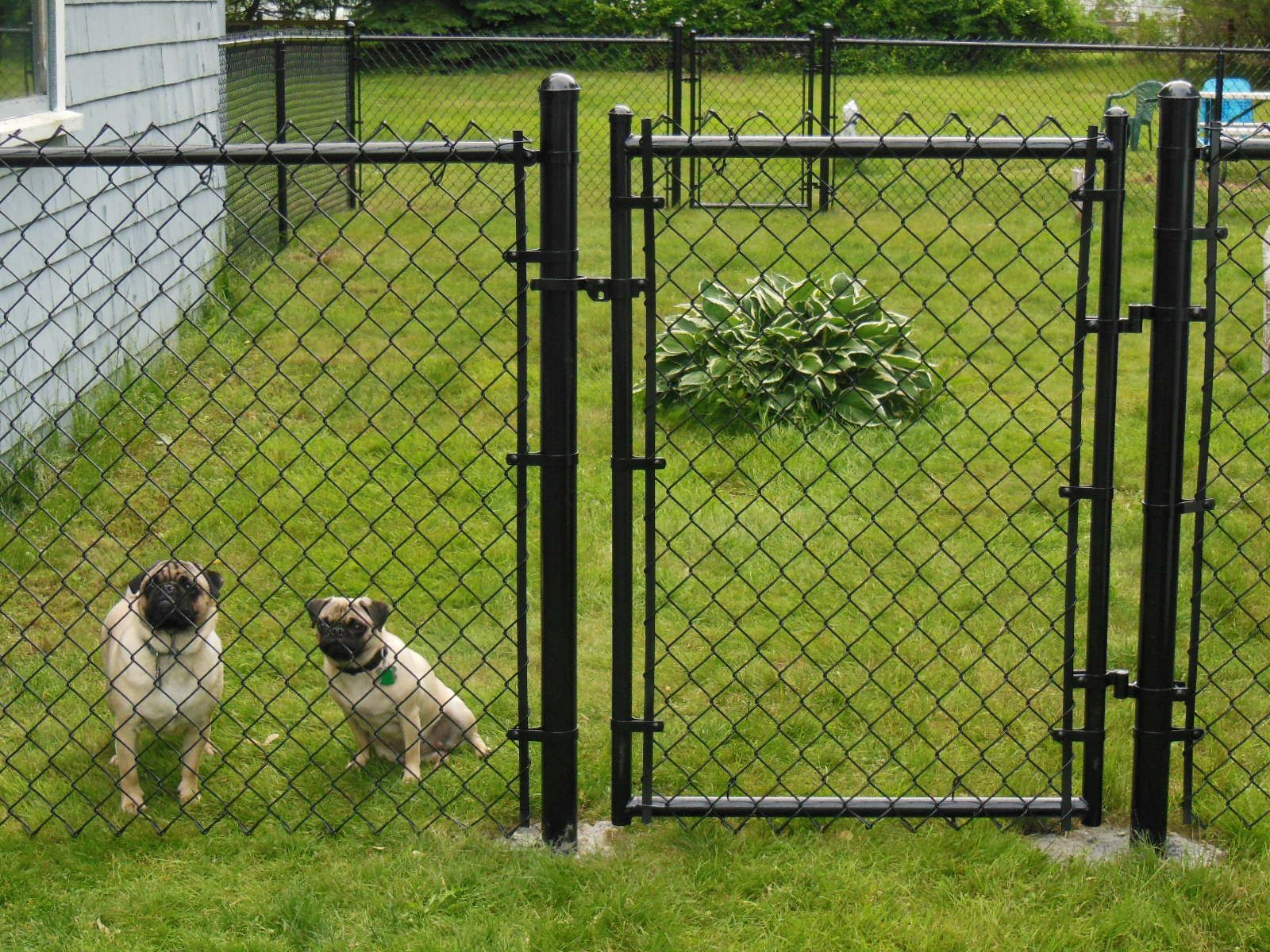 Best 25 black chain link fence ideas on pinterest fence ideas unique front yard chain link fences dog fence beverly fences in boston ma baanklon Images