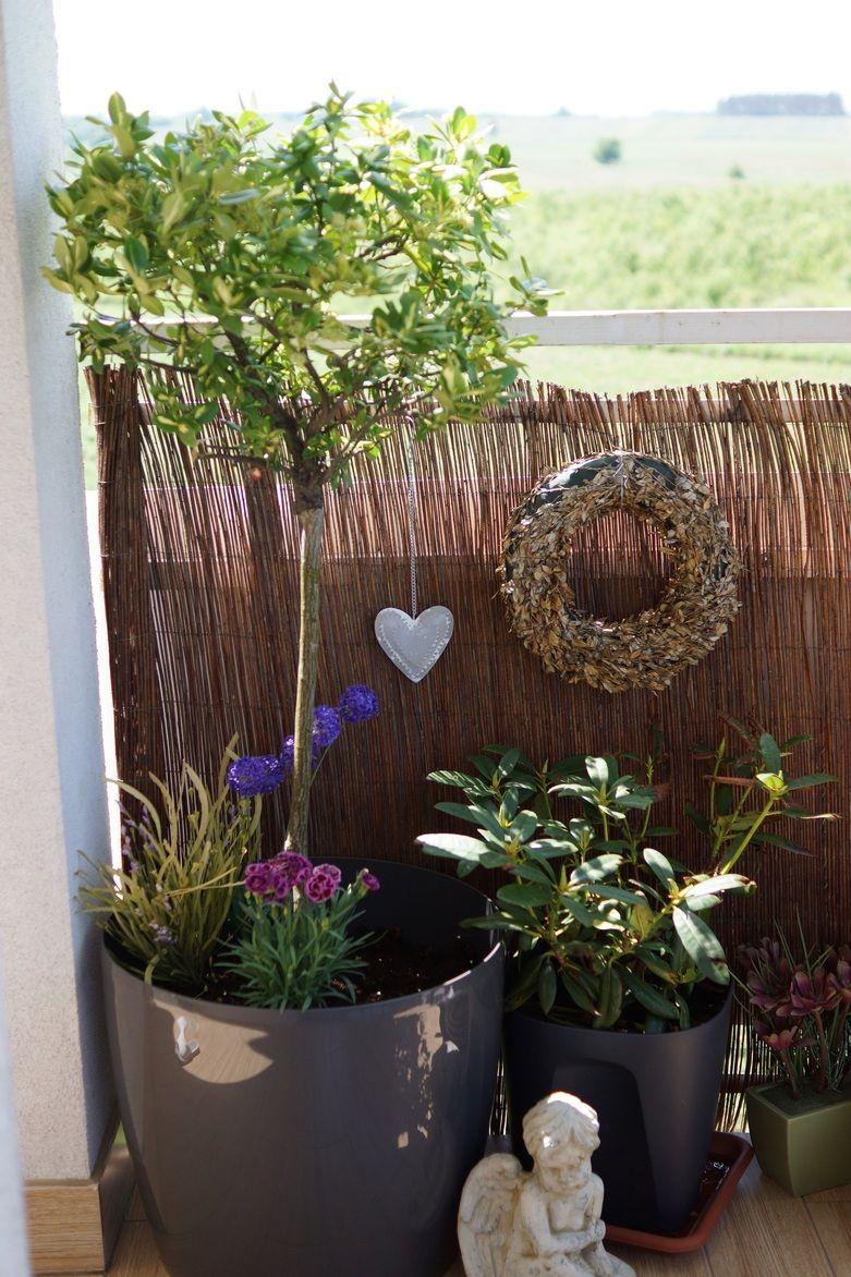 Zdja Cie Nr 13 W Galerii Balkon W Majowej Odsa Onie A Deccoria Pl Planter Pots Planters Plants