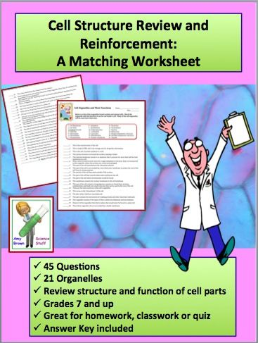 additionally Cell Organelles and Structures Puzzle for Review or essment   TpT also Cell Organelles Worksheet KEY   Name Date Pd Cell Organelles as well  as well Function Of The Organelles Worksheet Cell Organelles And Their as well  additionally Cell Organelles Worksheet furthermore  besides Cell Organelles Worksheet 2 additionally 12 Cell Review Worksheet Answers Biology Cell Organelles Worksheet besides Cell Organelles Worksheet additionally  additionally Cell organelle Review Worksheet 22 Great Cell organelles and their likewise Cell Organelles Matching Worksheet   Biology   Matching worksheets furthermore Cell organelles Worksheet Answers   Siteraven further Cell Organelles Review Worksheet To Print   Free Educations Kids. on cell organelles review worksheet answers