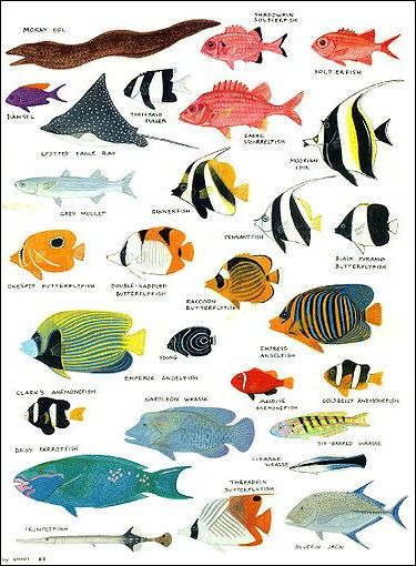 20120517 Reef Fish5 Jpg Saltwater Aquarium Fish Aquarium Fish For Sale Fish Chart
