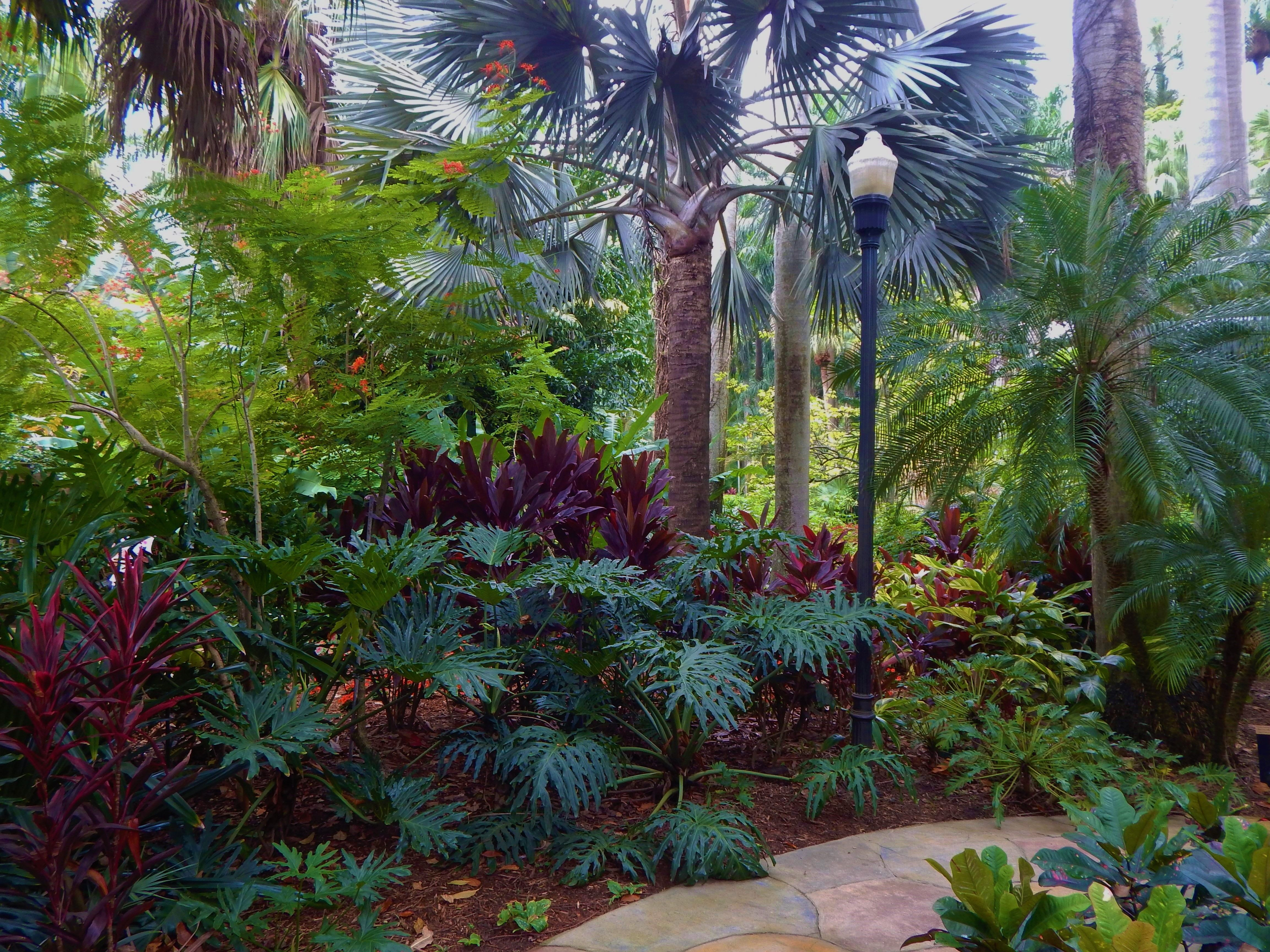 Palm Trees With Nice Companion Plants Small Tropical Gardens