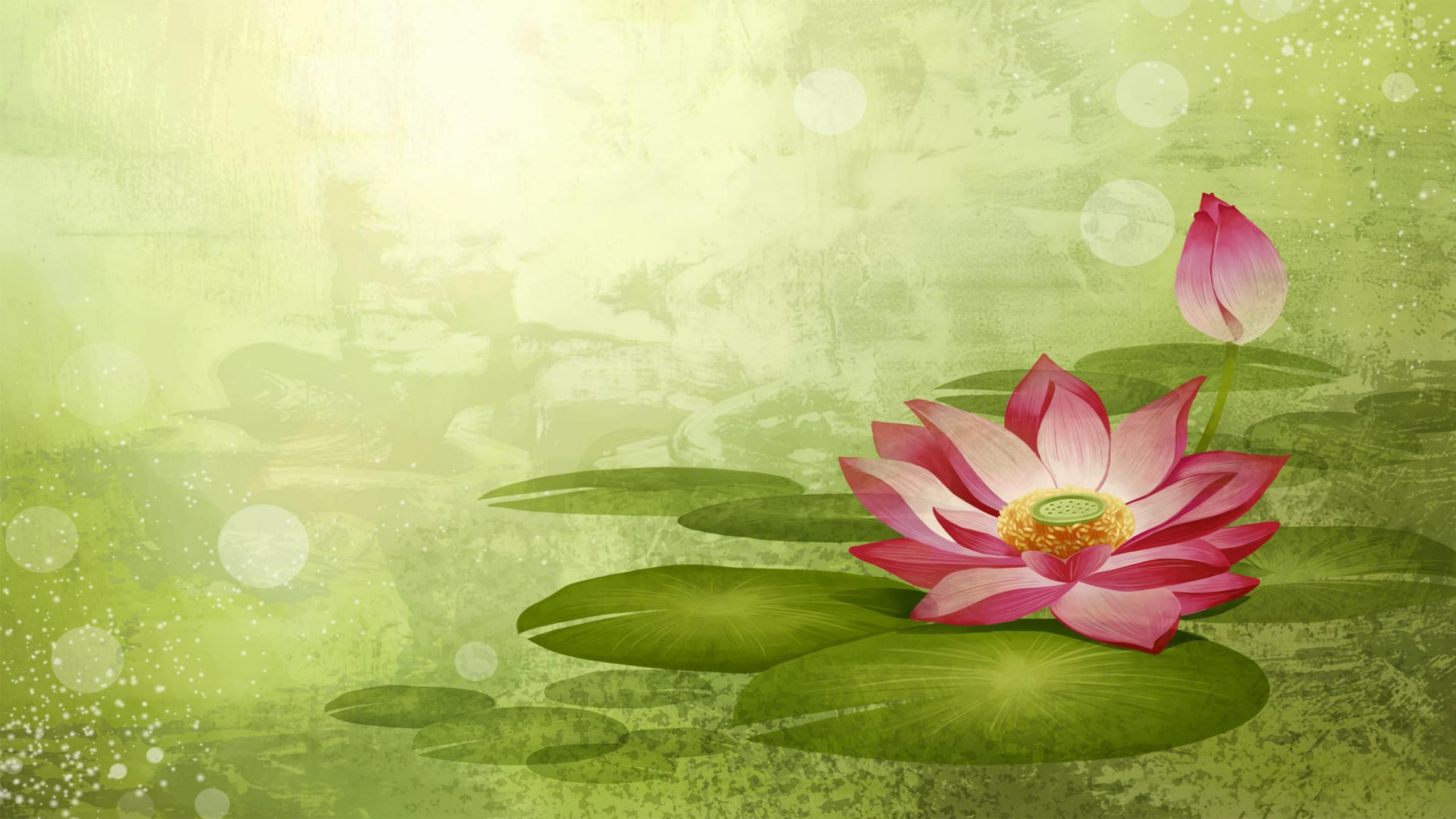 Lotus flower wallpapers home improvements pinterest lotus flower wallpapers mightylinksfo