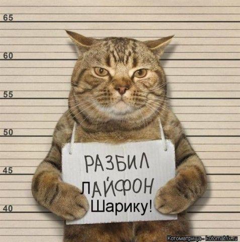 Смешные картинки с животными | Юмор про кошек, Смешные ...